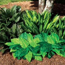 All-Weather Forever Plant - Variegated Hosta