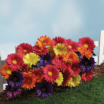 All-Weather Forever Blooms - Colourful Daisy